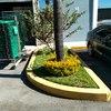 Mantenimiento de jardineras industriales en zapopan, aviacion y santa margarita