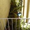 Arreglar y mantenimiento de jardin