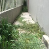 Cortar cesped y yerbas de terraza