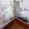 Reparación profecional de humedades y moho