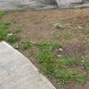 Colocar rollos de pasto en un área de 25 m2 en san bernardino texcoco