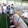 Realziar una granja porcicola