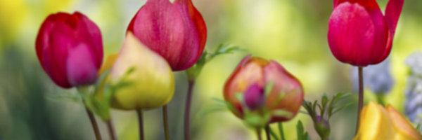 jardineros_9_62627