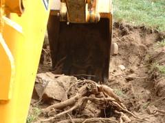 excavaciones_155_62593
